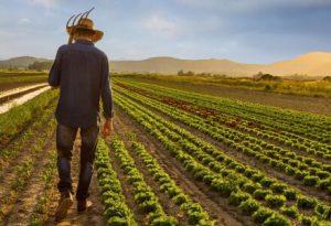 Você sabia que em julho é celebrado o dia do agricultor? - Mercadão de Vila Formosa