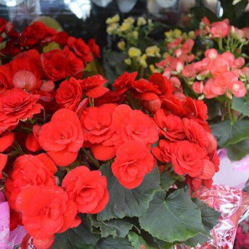 8-floricultura_canarias